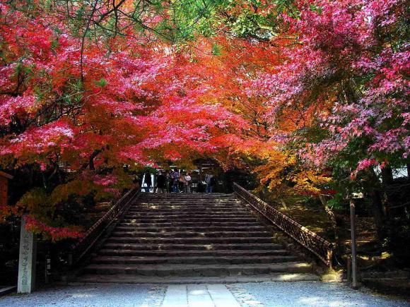 Jardins japonais art des fleurs l 39 art floral cowblog for Hotel jardin de fleurs kyoto